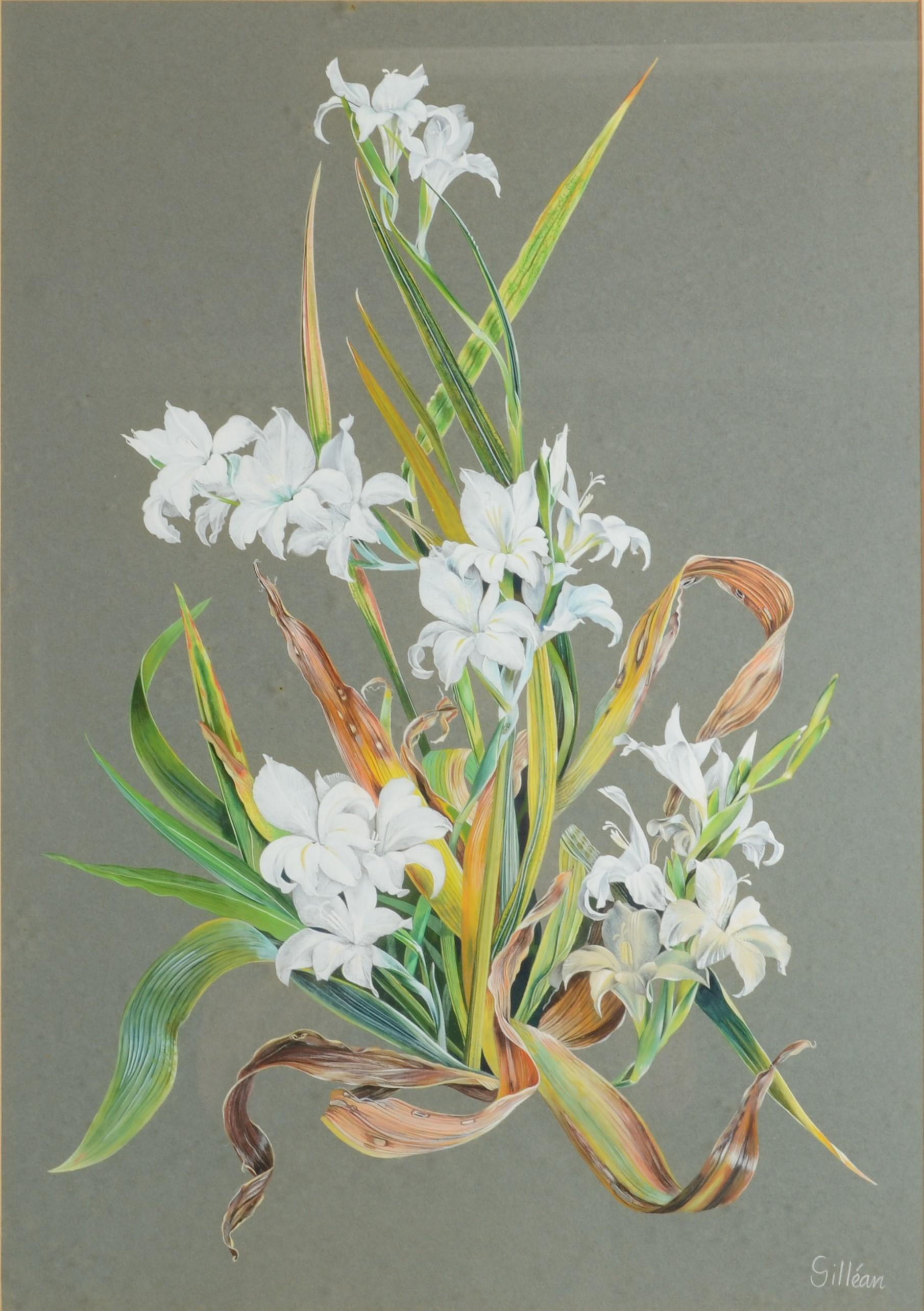 Lot 48 - GILLEAN WHITAKER Botanical Studies - a pair Watercolour Signed 63 x 45 cm