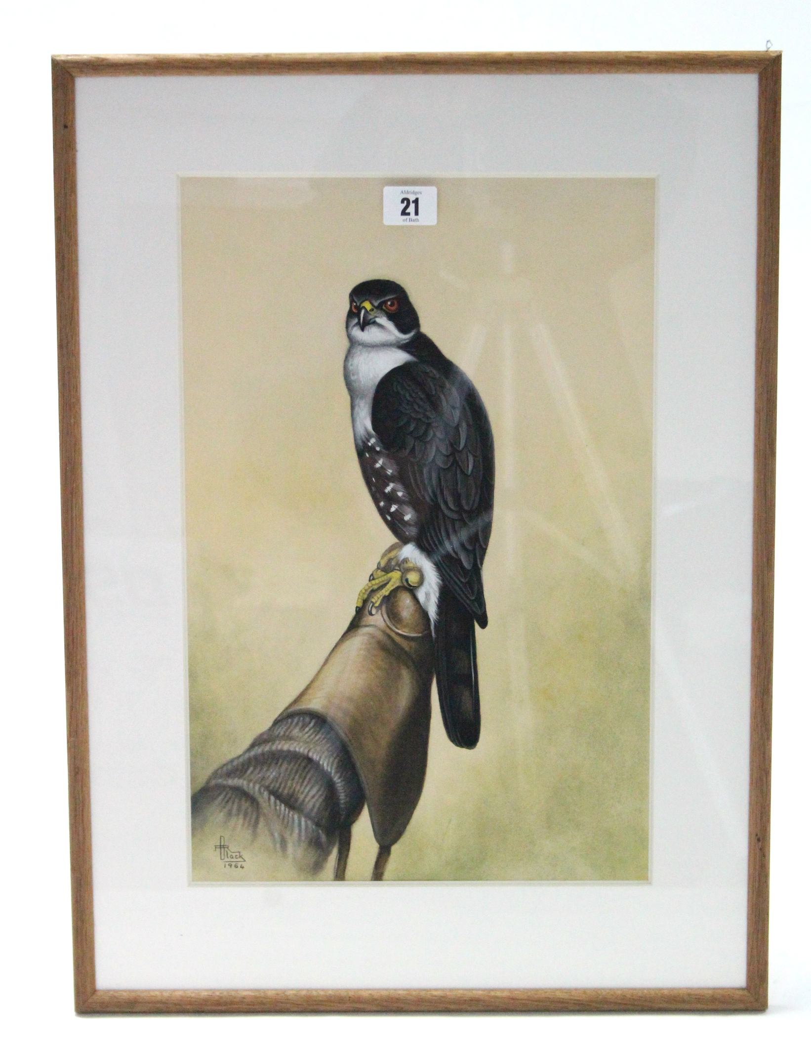"""Lot 21 - A 1960's watercolour painting of a female black arrowhead hawk, signed Black & dated 1964, 16½"""" x"""