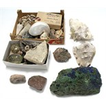 A collection of various seashells & geological specimens.