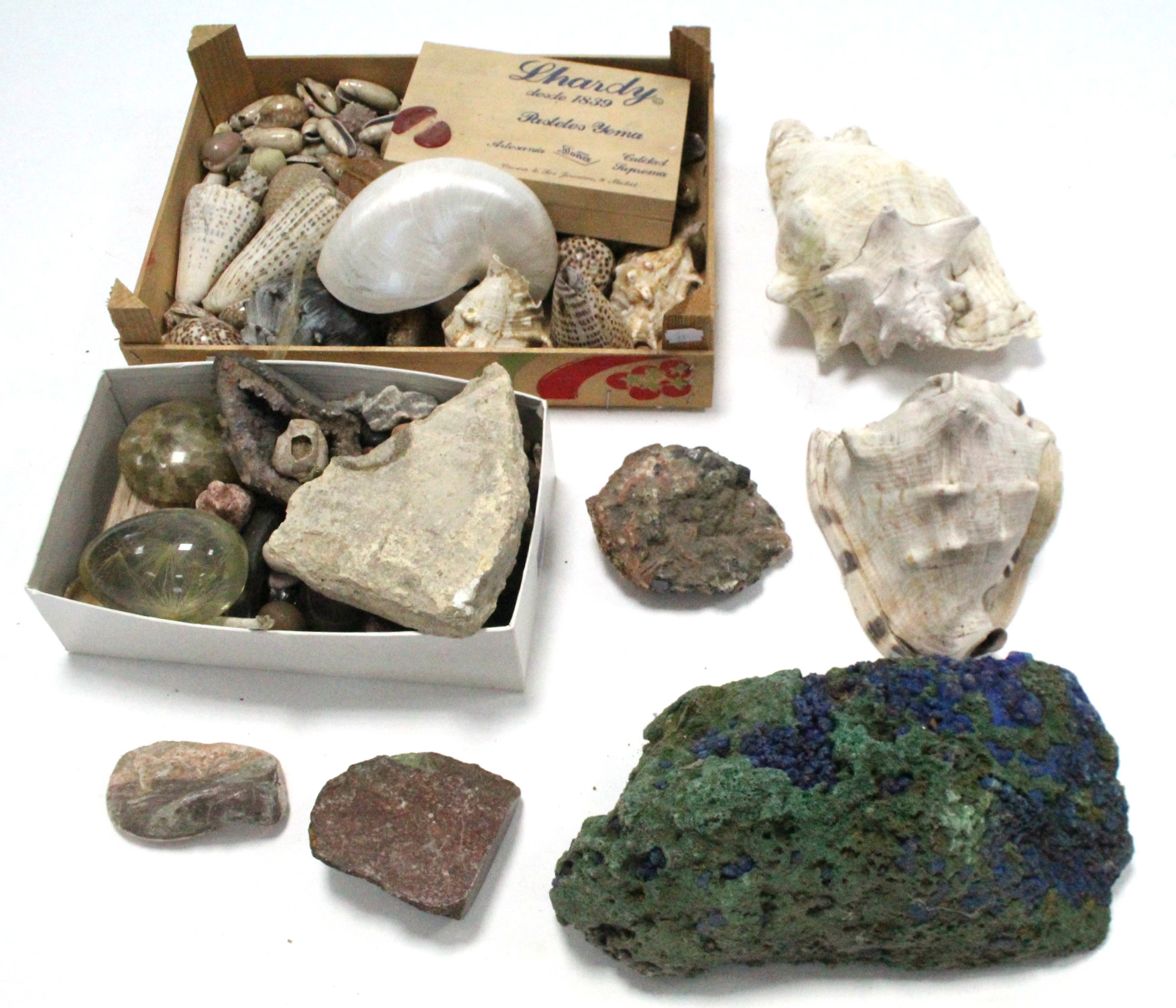 Lot 24 - A collection of various seashells & geological specimens.