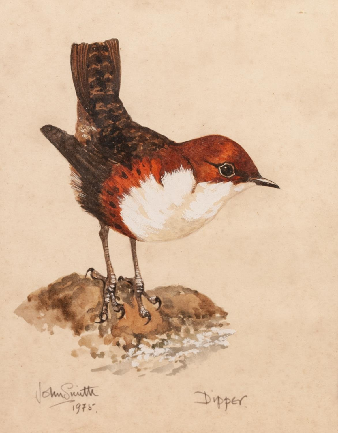 Lot 179 - JOHN SMITH (TWENTIETH CENTURY) TWO WATERCOLOUR DRAWINGS Studies of birds, ?Dipper? and ?Red-backed