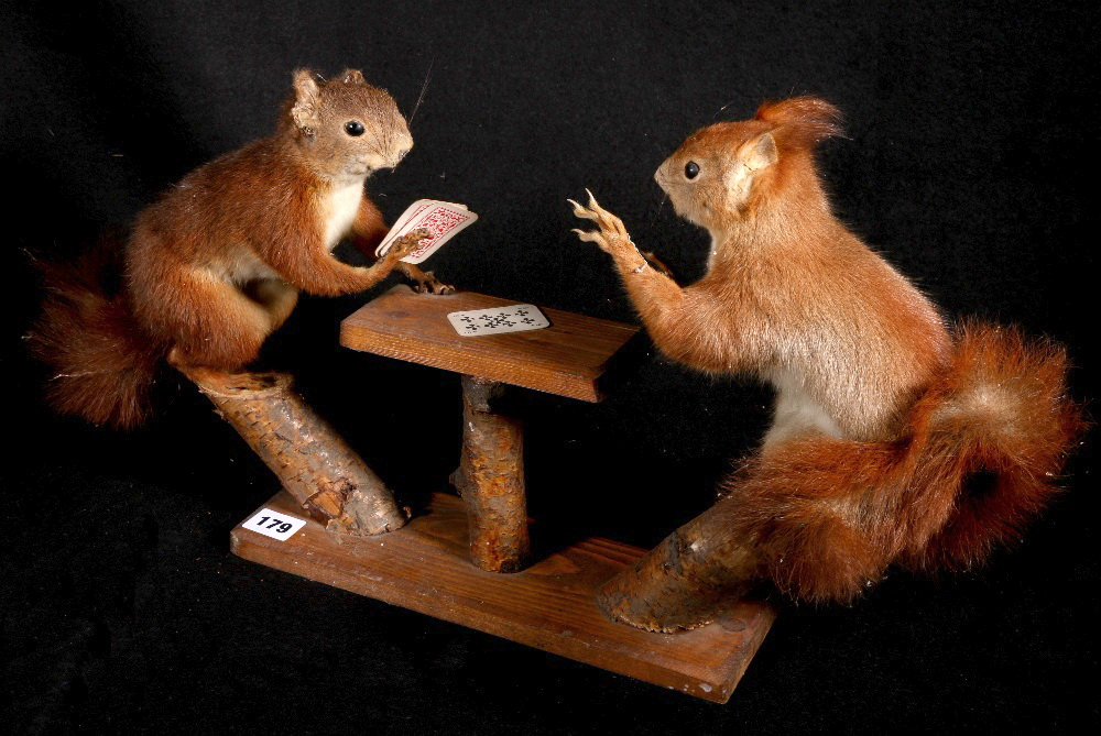 Lot 179 - Colin Scott taxidermy model of two squirrels playing cards, 30cm. CONDITION REPORT: Squirrel with