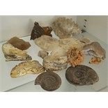 Antique Vintage Collection Fossils Crystals & Geological Items NO RESERVE