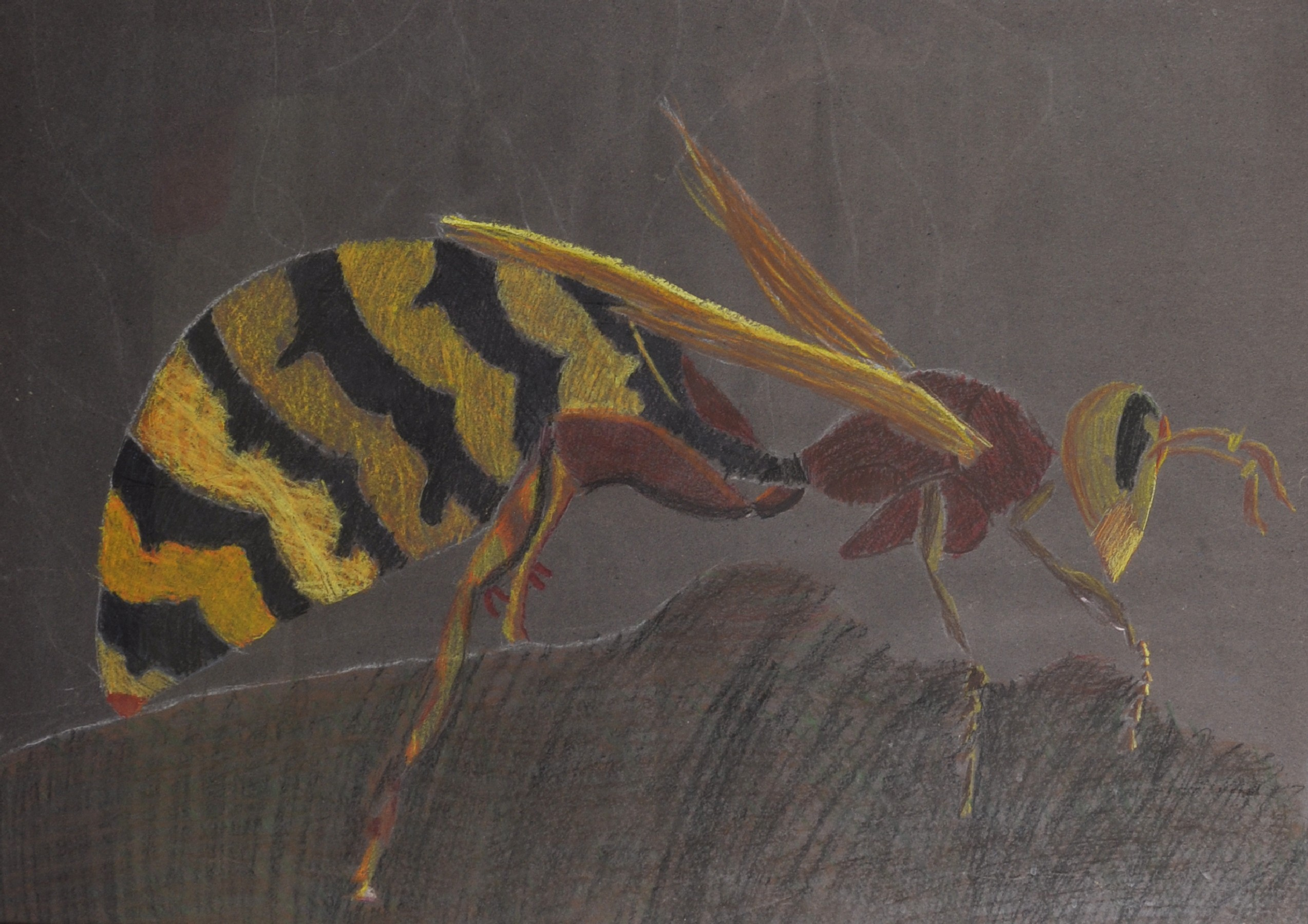 "20th - 21st Century English School. Study of a Wasp, Crayon, 22.5"" x 32""."
