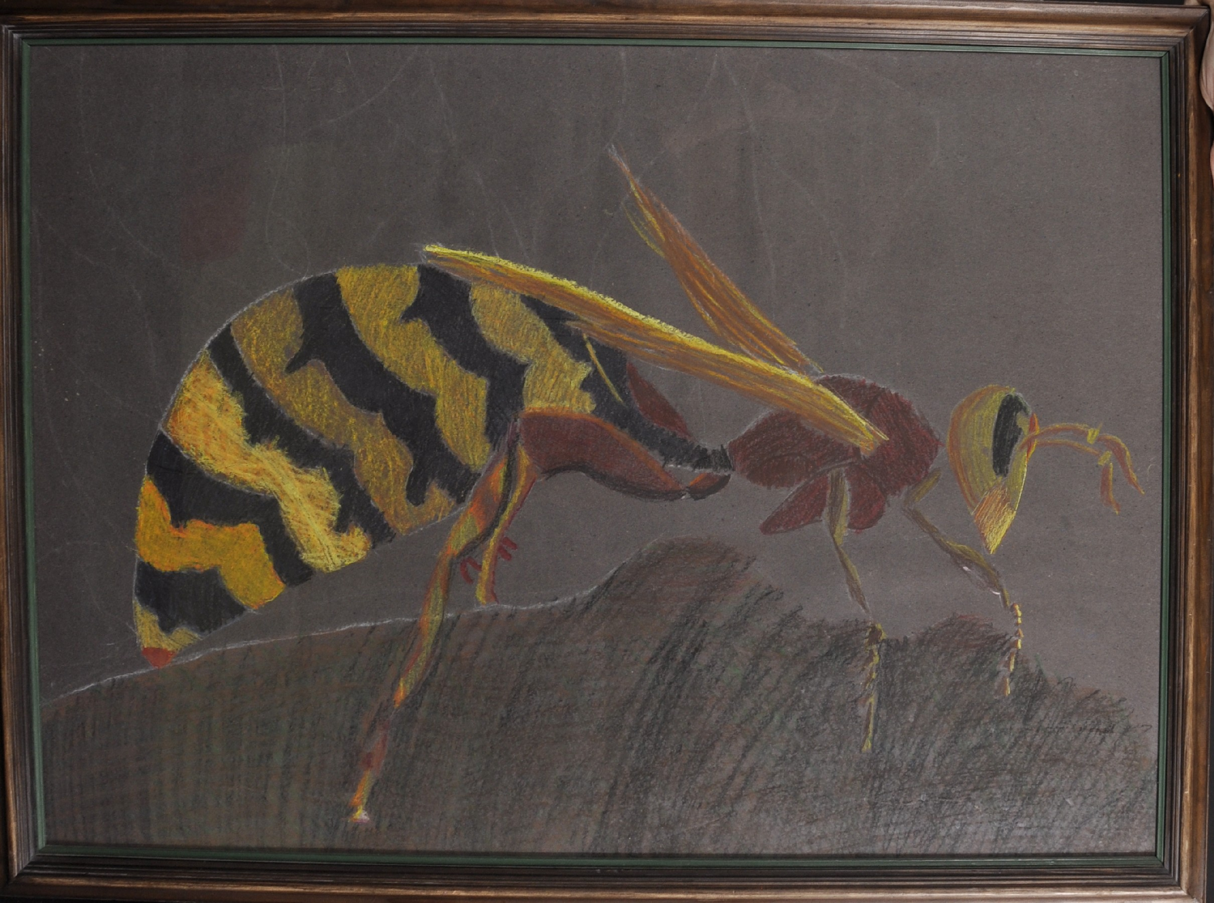 "20th - 21st Century English School. Study of a Wasp, Crayon, 22.5"" x 32"". - Image 2 of 3"