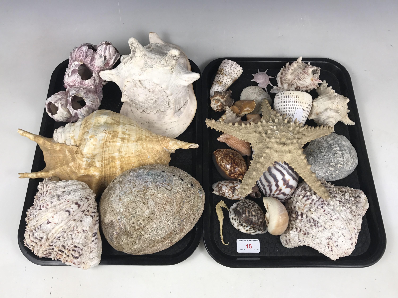 Lot 15 - A large quantity of sea shells etc