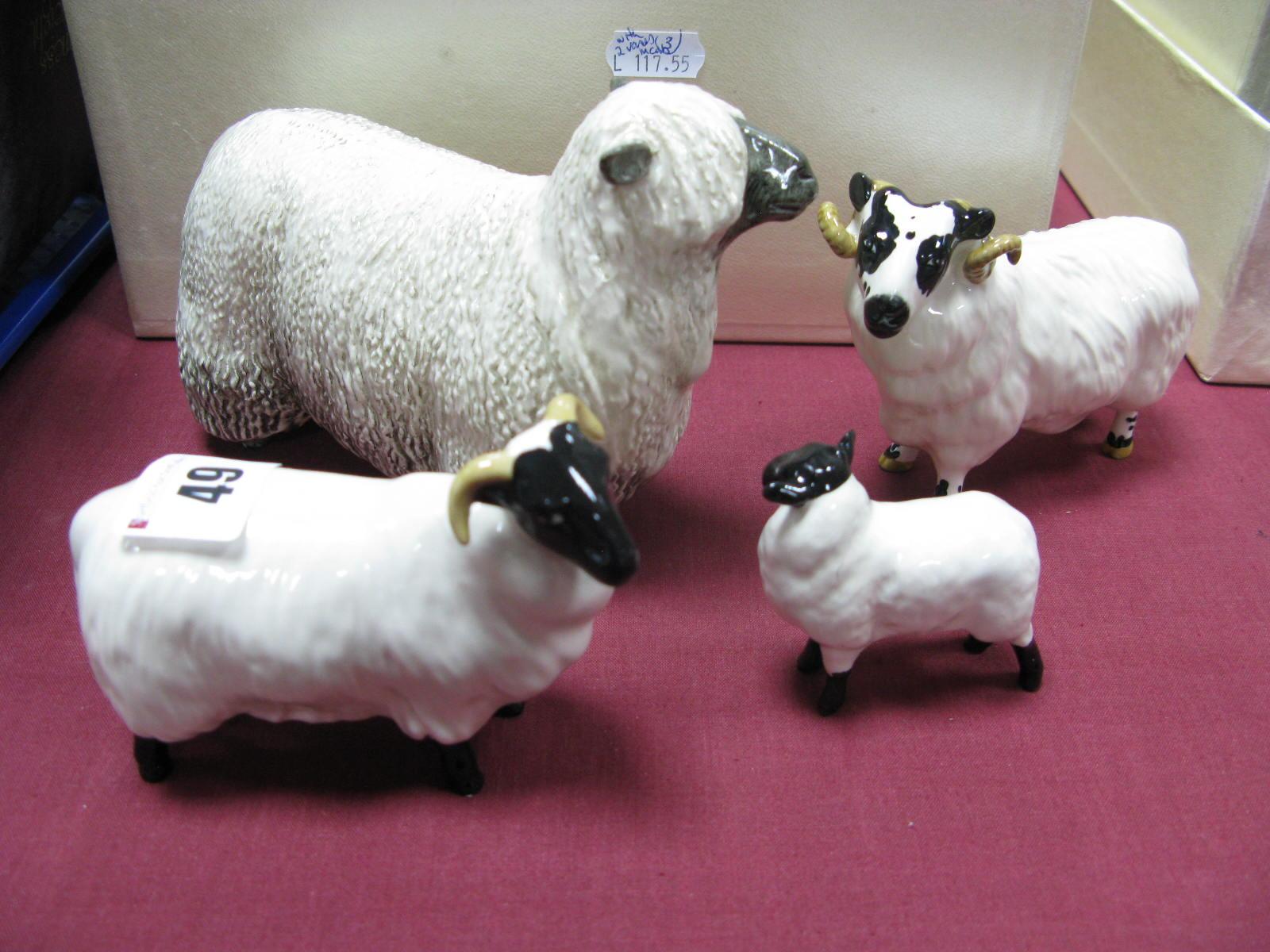 Lot 49 - A Beswick Black Faced Sheep, no. 1765, Ram, no. 3071 and Lamb, no. 3071 and a Wensleydale Sheep