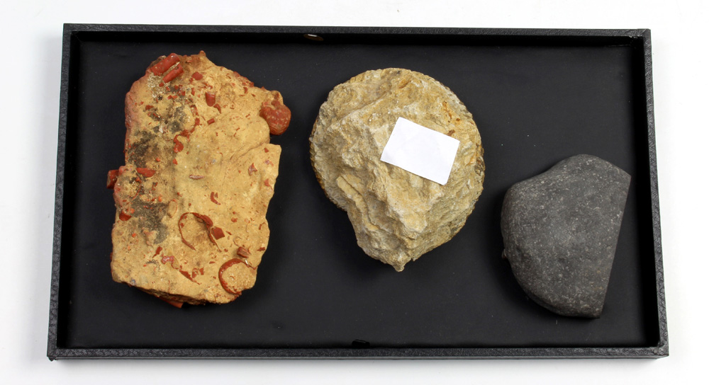 (lot of 3) Ammonite fossil group - Image 2 of 2