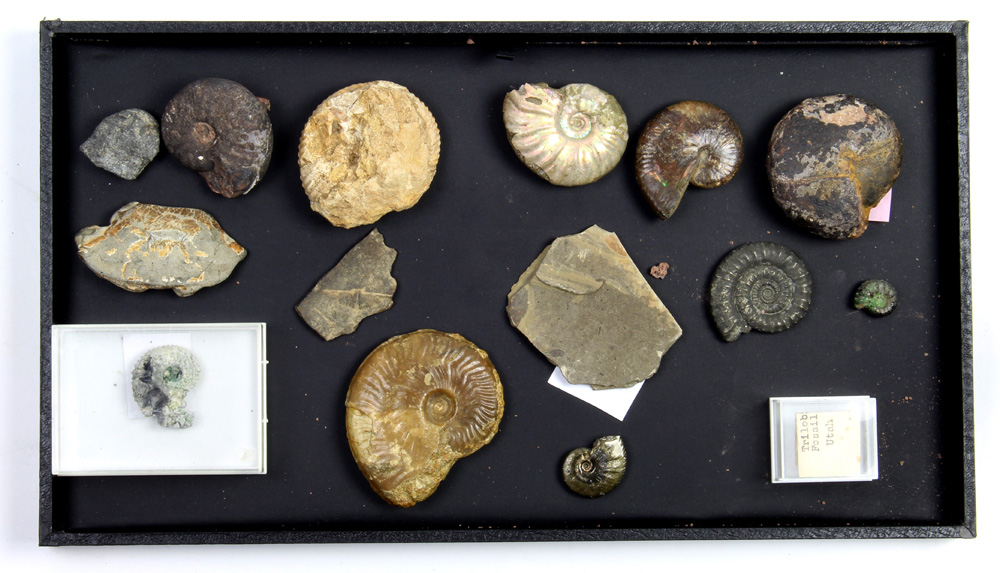 (lot of 15) Assorted fossil group - Image 2 of 2
