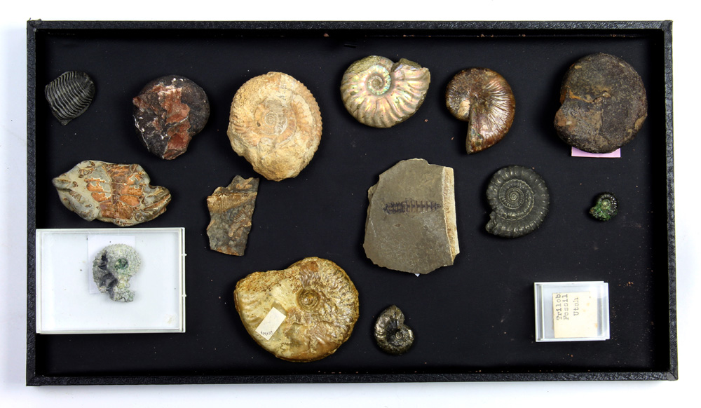 (lot of 15) Assorted fossil group