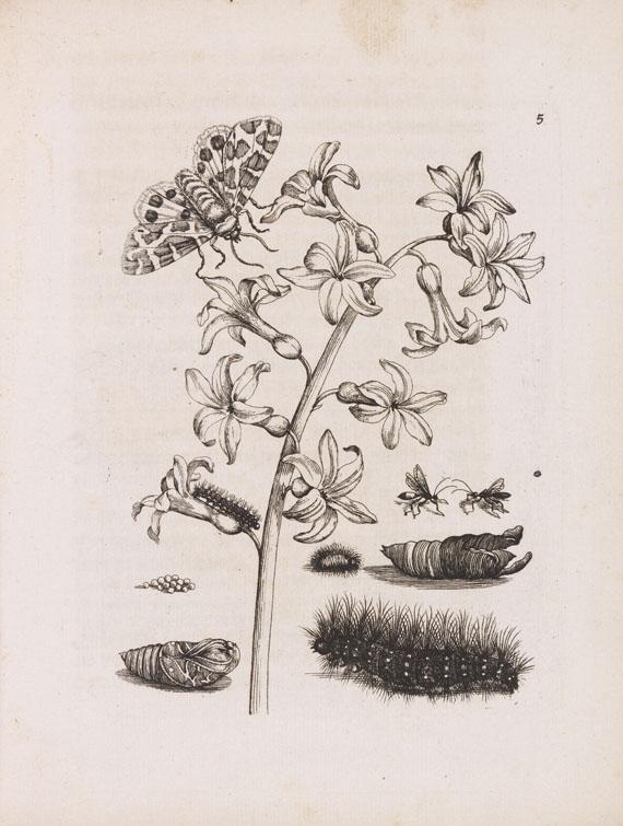 Lot 24 - Maria Sybilla Merian Der Raupen wunderbare Verwandelung, und sonderbare Blumen-nahrung. 2 Teile in 1