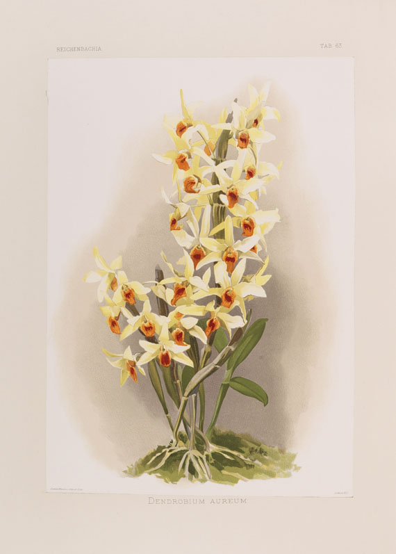 Lot 34 - Frederick Sander Reichenbachia. Orchids illustrated and described. 4 Teile in 7 Bänden. St.