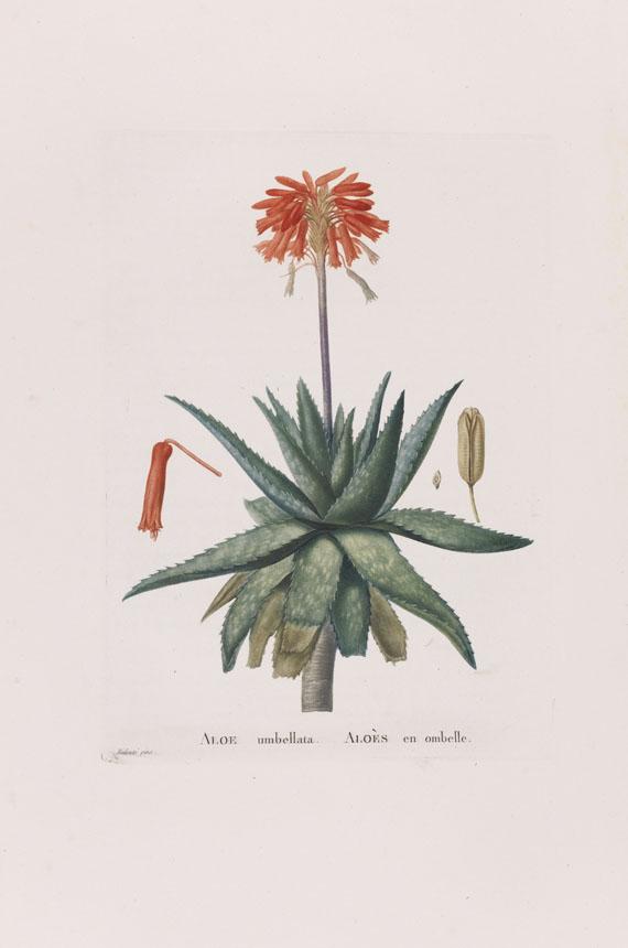 Lot 32 - Augustin Pyramus de Candolle Plantarum historia succulentarum. Histoire des plantes grasses. 28