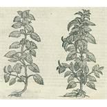 (Matthiolus,P.A.(Matthiolus,P.A. I discorsi ne i sei libri della materia medicinale di(Matt