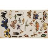 ANONYM: A STUDY OF INSECTS 17th century 18,5x30 cm Watercolor and gouache on parchment. Especially