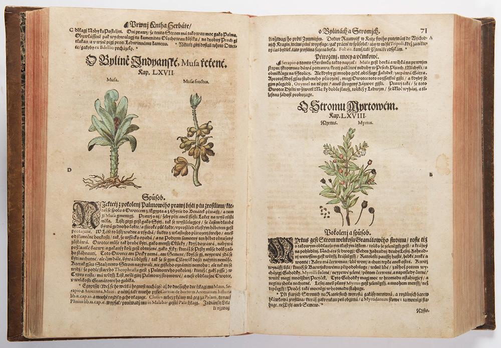 PIETRO ANDREA MATTIOLI (1501-1577): A HERBARIUM 37x26x10 cm The Czech edition with colored - Image 3 of 4