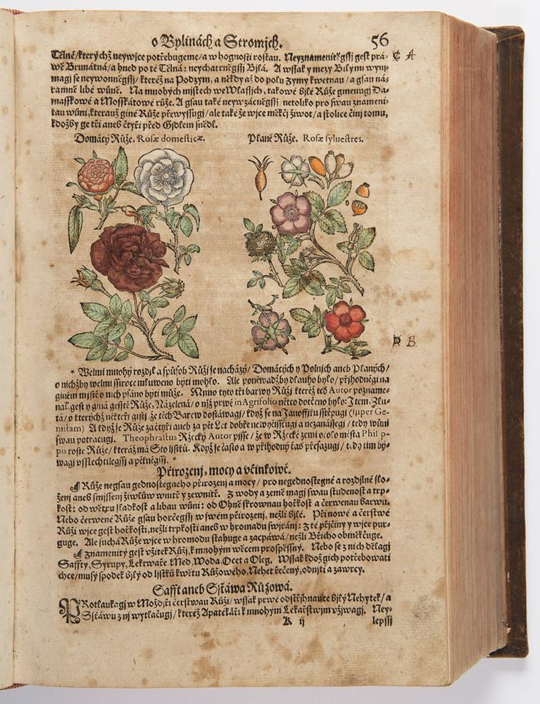 PIETRO ANDREA MATTIOLI (1501-1577): A HERBARIUM 37x26x10 cm The Czech edition with colored - Image 4 of 4