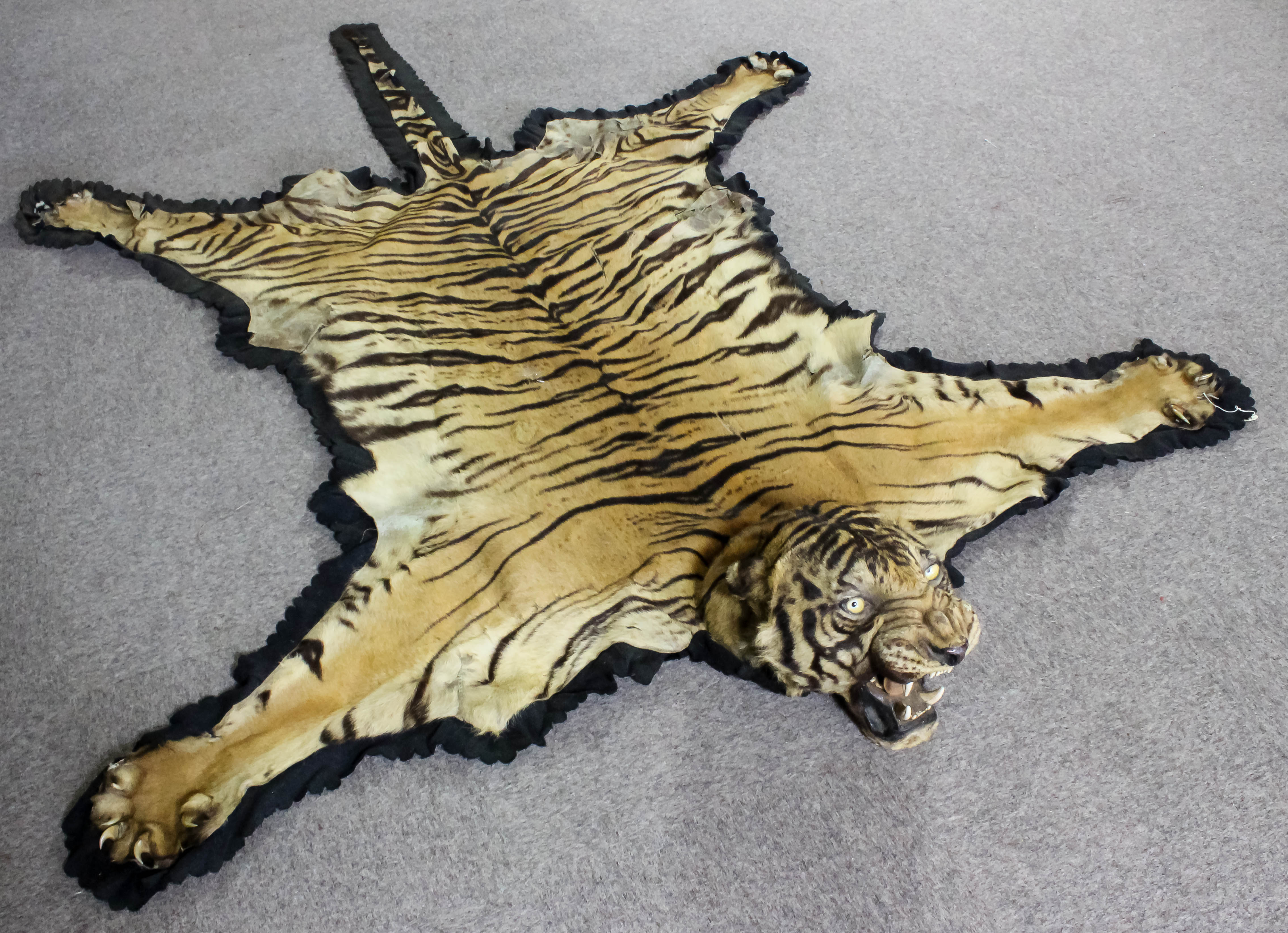 An Early 20th Century Indian Tiger Skin Rug Mounted By Van Ingen