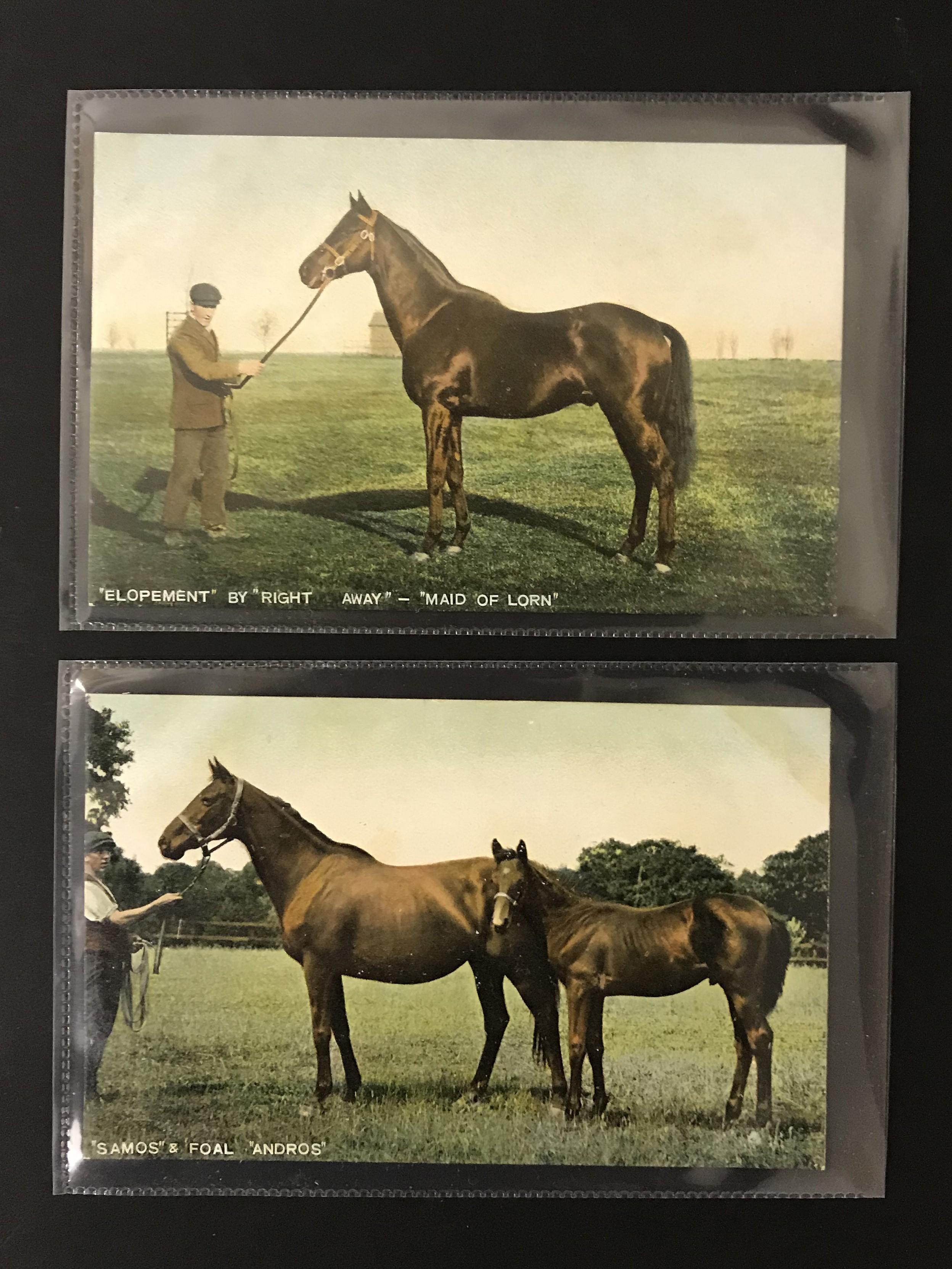 SIX UNUSED POSTCARDS BY B & D LONDON - KROMO SERIES PRINTED IN SAXONY - HORSES - Image 4 of 5