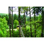Perfect corporate team building day at Go Ape Adventure for 10 guests