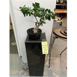 Présentoir et petit arbre Style Bonzai