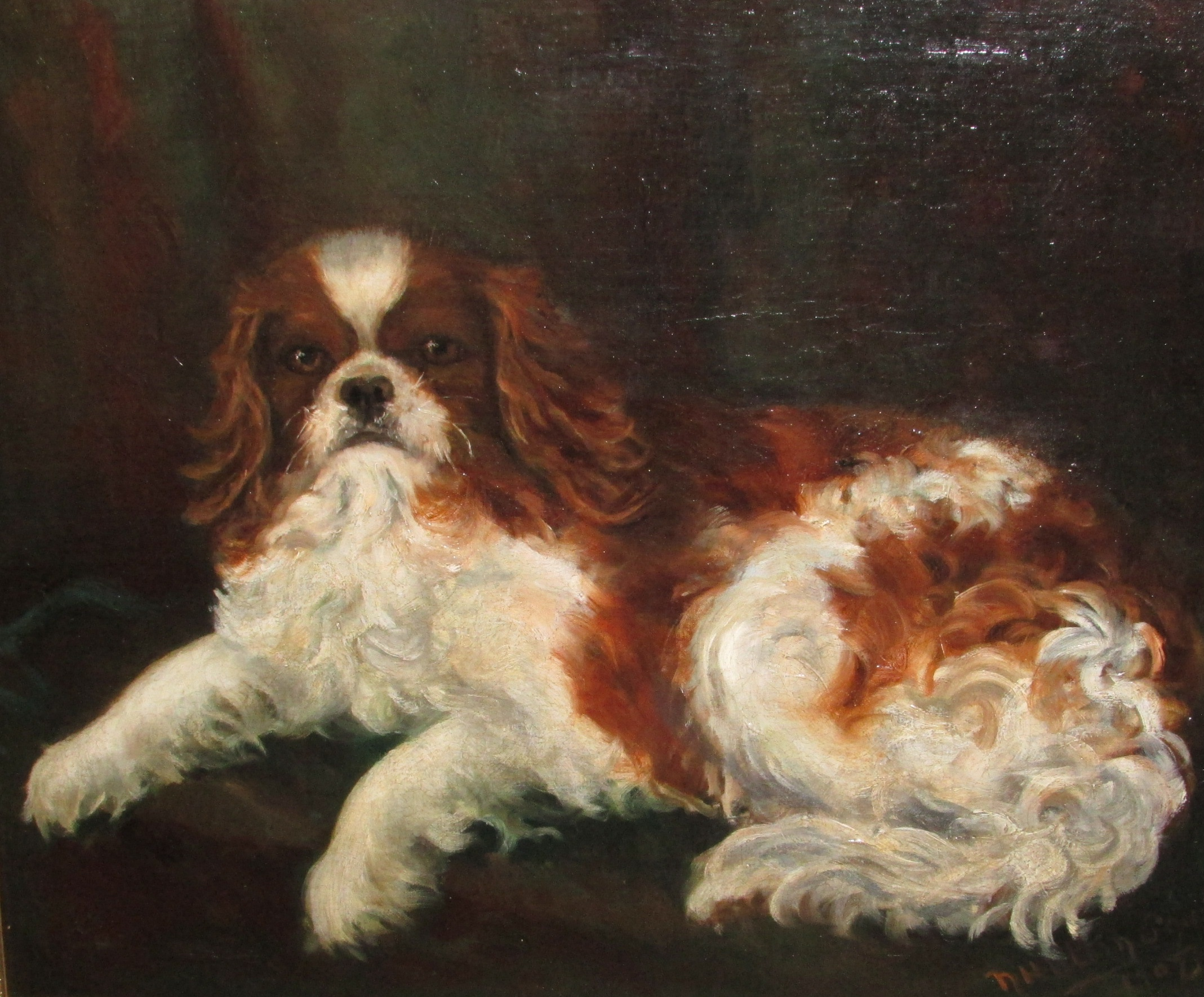 Lot 218 - N Hutton Squires - oil on canvas study of recumbent King Charles spaniel, signed lower right and