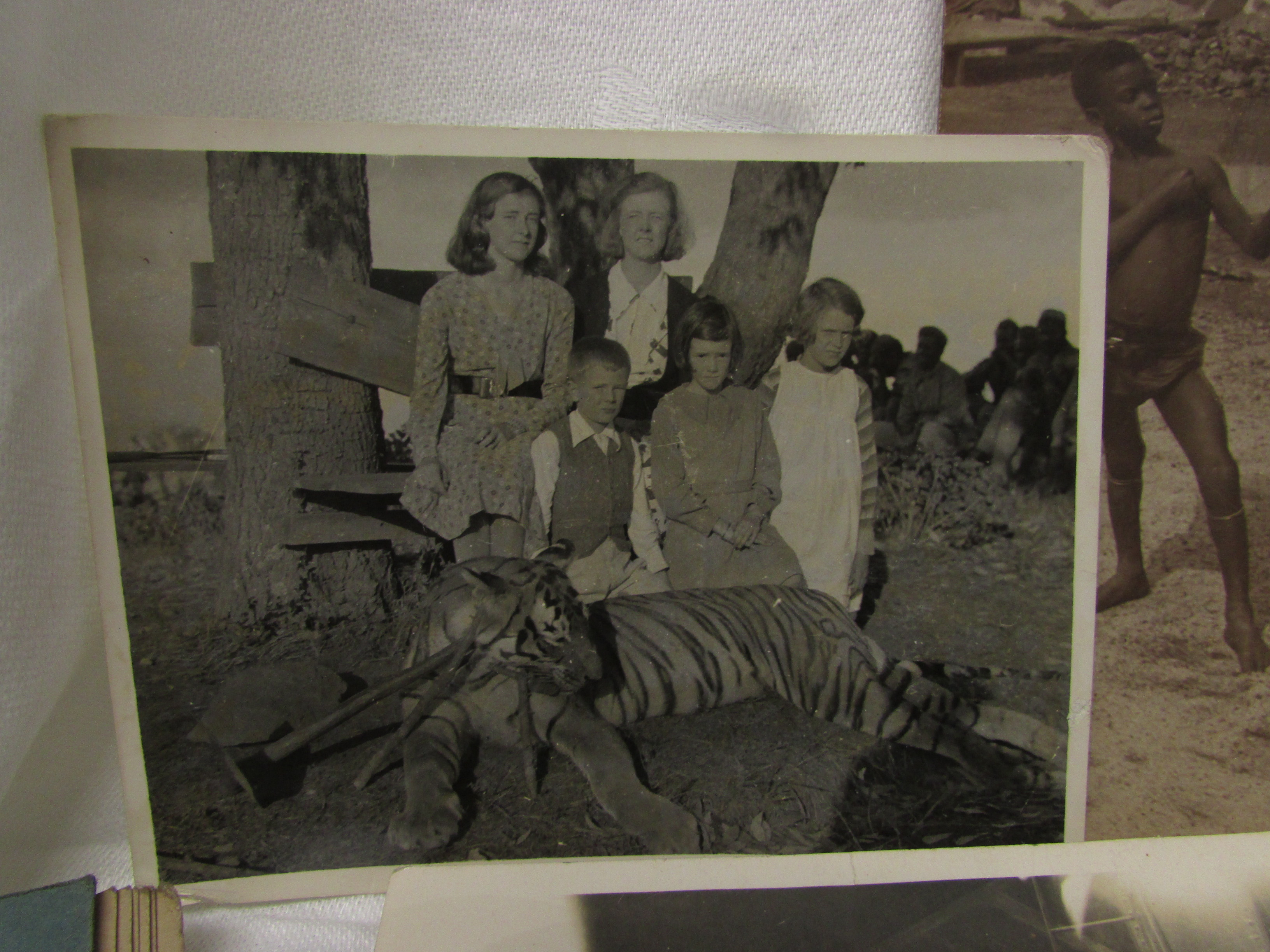 """Lot 192 - Black and white photograph of a hunted tiger with onlookers, annotated in pencil 'Taken on the """""""