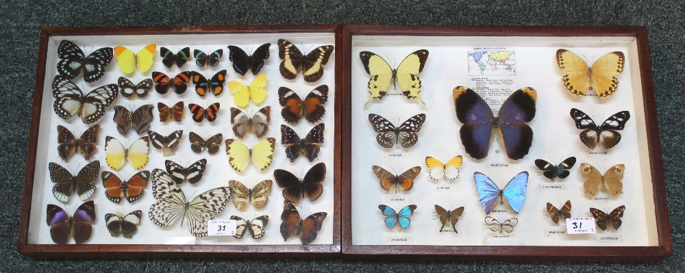 A collection of world butterflies and moths by Major H.L.