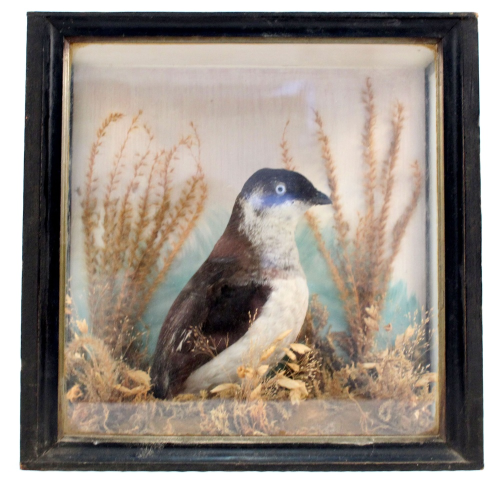 Lot 107 - A taxidermy cased and mounted bird in naturalistic setting,