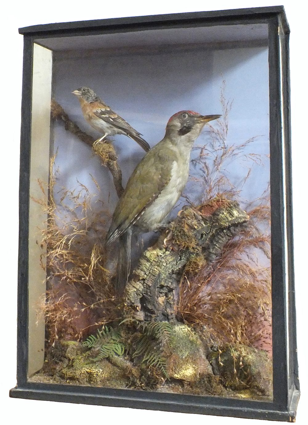 A taxidermy woodpecker with a brambling cased within a naturalistic setting,