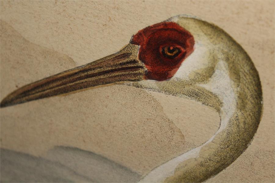 Lot 166 - After J.F & J.A Naumann - Leipzig, A hand coloured Lithograph of a White Crane - Ornithological