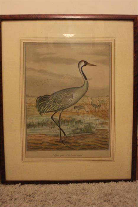 Lot 167 - After J.F & J.A Naumann - Leipzig, A hand coloured Lithograph of a Crane - Ornithological