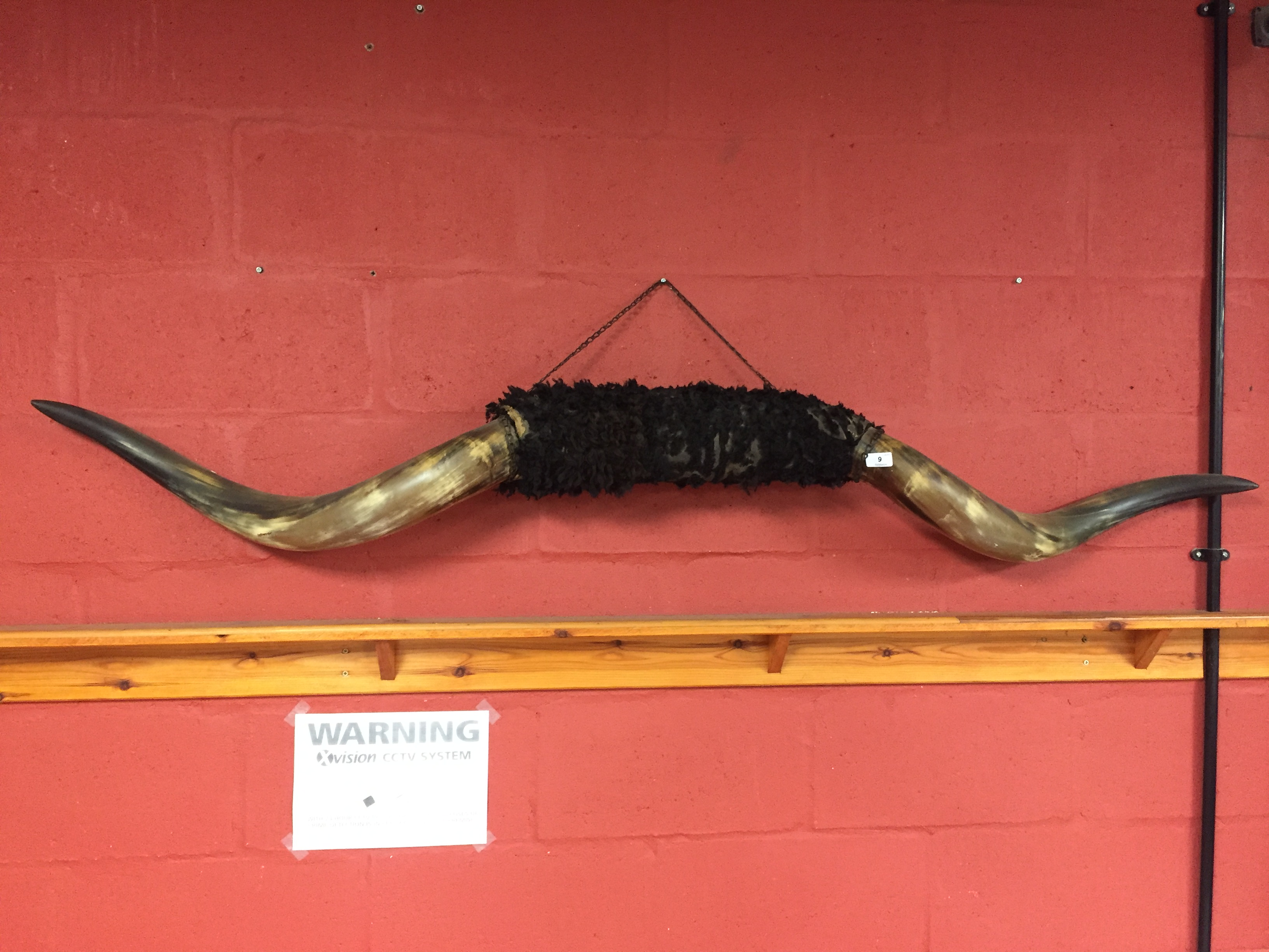 Lot 6 - PAIR OF LARGE MOUNTED COW HORNS