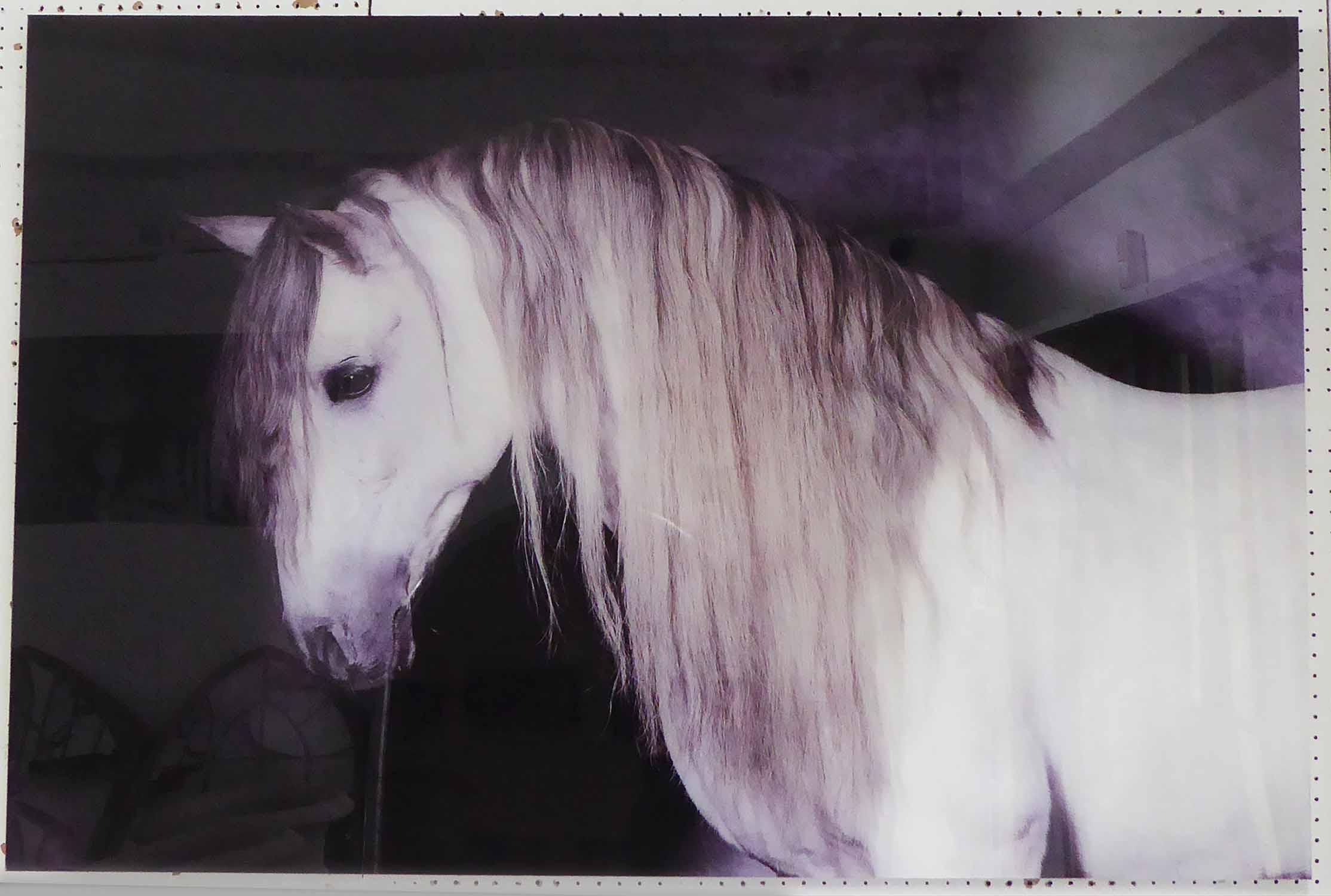 Lot 73 - CONTEMPORARY SCHOOL, The Grey Horse, 120cm x 80cm.