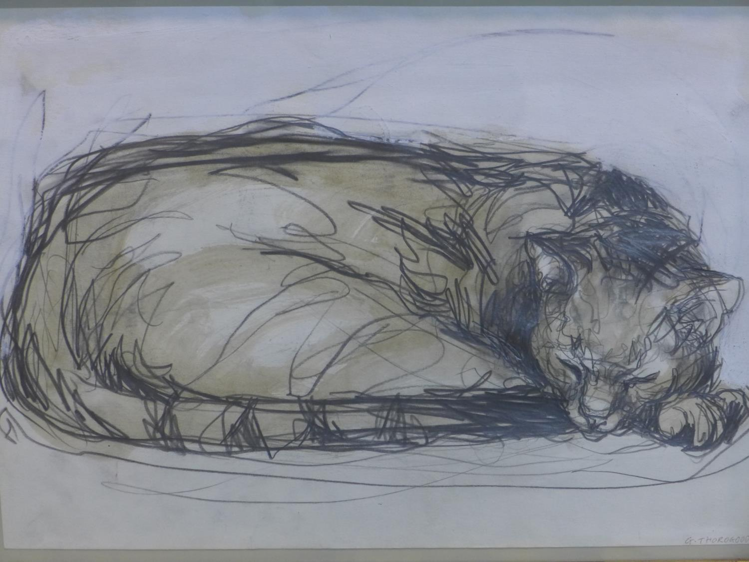 Contemporary British draughtsman, sleeping cat, pencil and watercolour, signed and dated 'G.