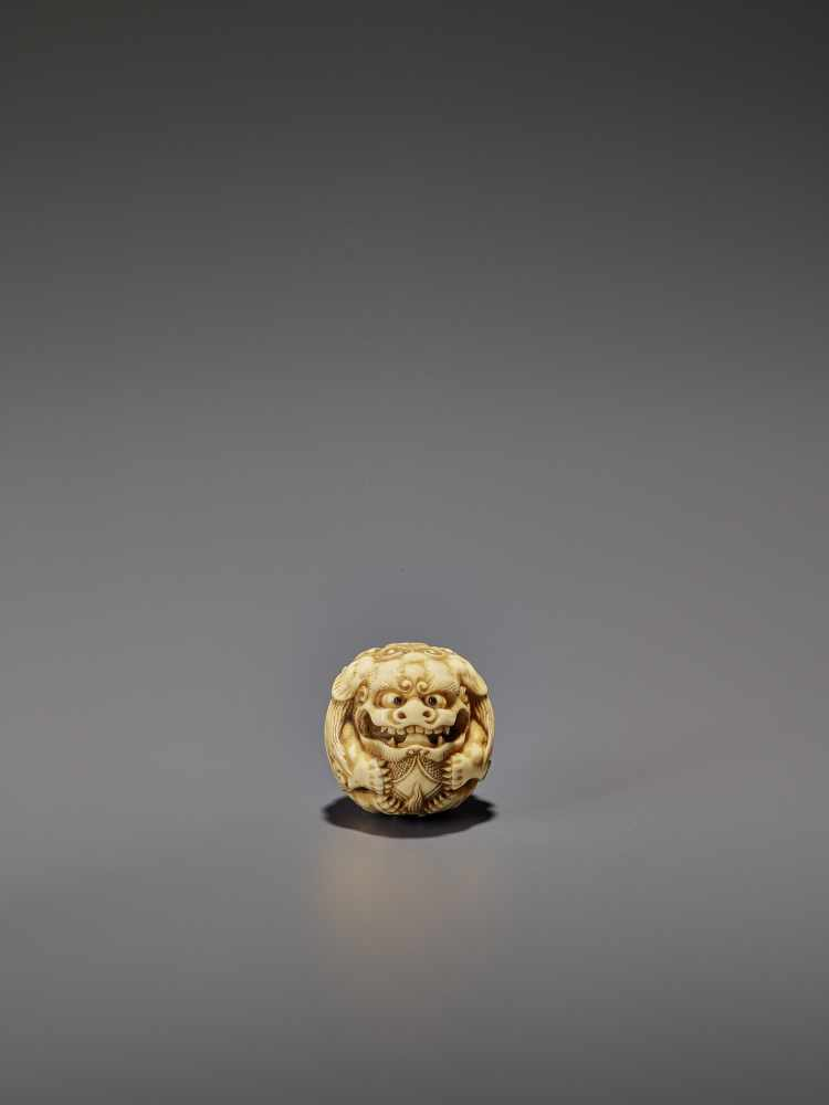 AN IVORY NETSUKE OF A SHISHI ROLLED INTO A BALL UnsignedJapan, 19th century, Edo period (1615-1868)