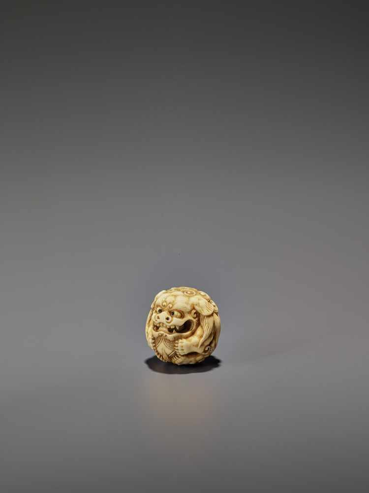 AN IVORY NETSUKE OF A SHISHI ROLLED INTO A BALL UnsignedJapan, 19th century, Edo period (1615-1868) - Image 4 of 9