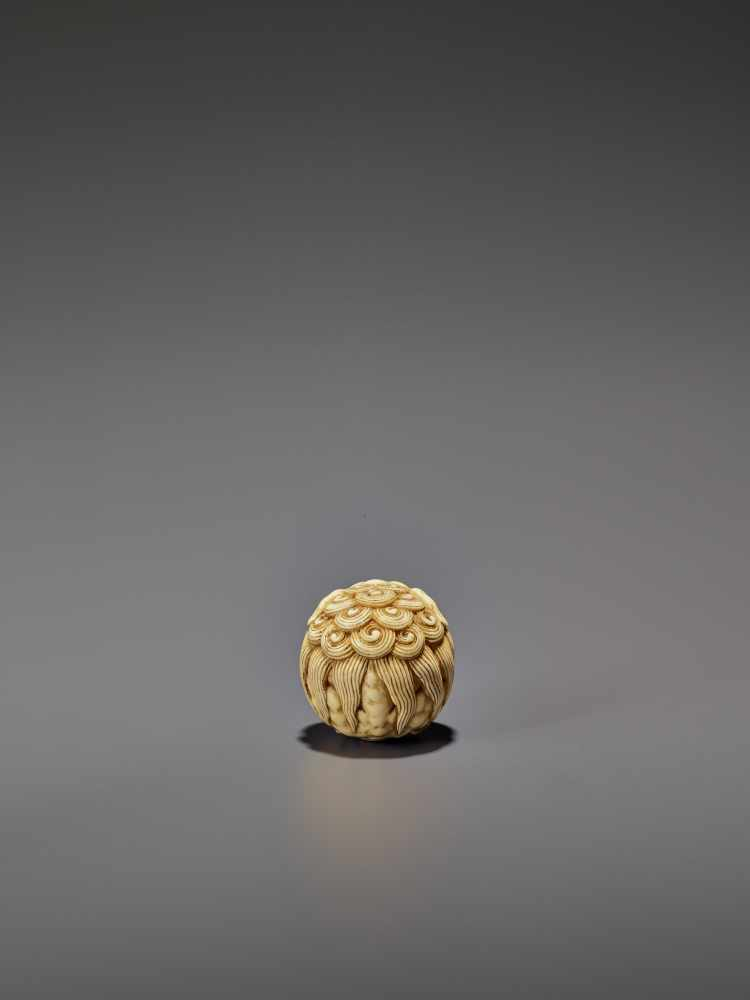 AN IVORY NETSUKE OF A SHISHI ROLLED INTO A BALL UnsignedJapan, 19th century, Edo period (1615-1868) - Image 2 of 9