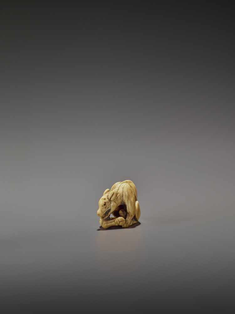 AN EARLY IVORY NETSUKE OF A WOLF WITH HAUNCH UnsignedJapan, Kyoto, 18th century, Edo period (1615- - Image 5 of 10