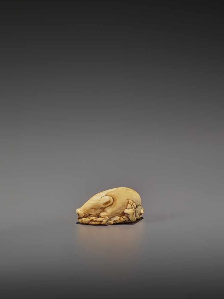 A FINE IVORY NETSUKE OF TWO RESTING BOARS UnsignedJapan, Kyoto, 18th century, Edo period (1615- - Image 6 of 9