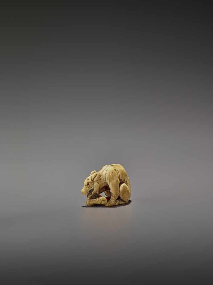 AN EARLY IVORY NETSUKE OF A WOLF WITH HAUNCH UnsignedJapan, Kyoto, 18th century, Edo period (1615- - Image 2 of 10