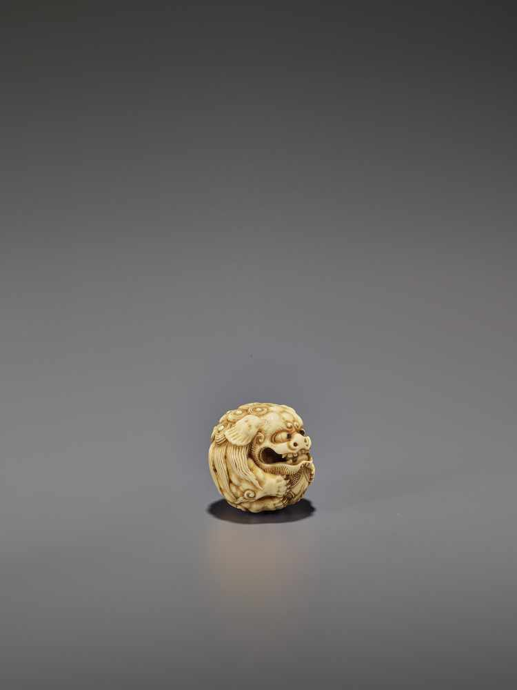 AN IVORY NETSUKE OF A SHISHI ROLLED INTO A BALL UnsignedJapan, 19th century, Edo period (1615-1868) - Image 8 of 9