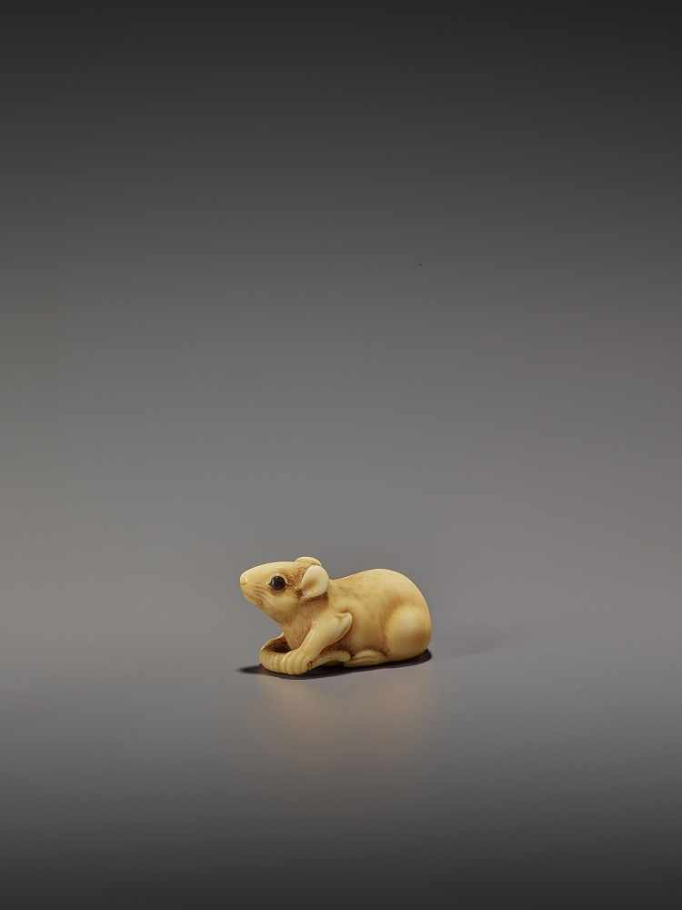 A CHARMING MARINE IVORY NETSUKE OF A RAT HOLDING ITS TAIL UnsignedJapan, 19th century, Edo period (