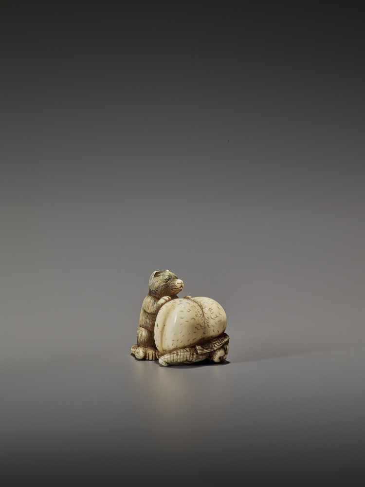 SHUNGETSU: IVORY NETSUKE OF A TANUKI SUFFOCATING A HUNTER WITH HIS SCROTUM By Shungetsu, signed - Image 8 of 11