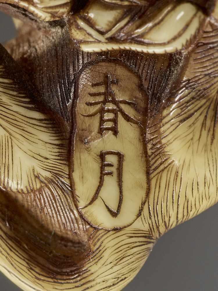 SHUNGETSU: IVORY NETSUKE OF A TANUKI SUFFOCATING A HUNTER WITH HIS SCROTUM By Shungetsu, signed - Image 11 of 11