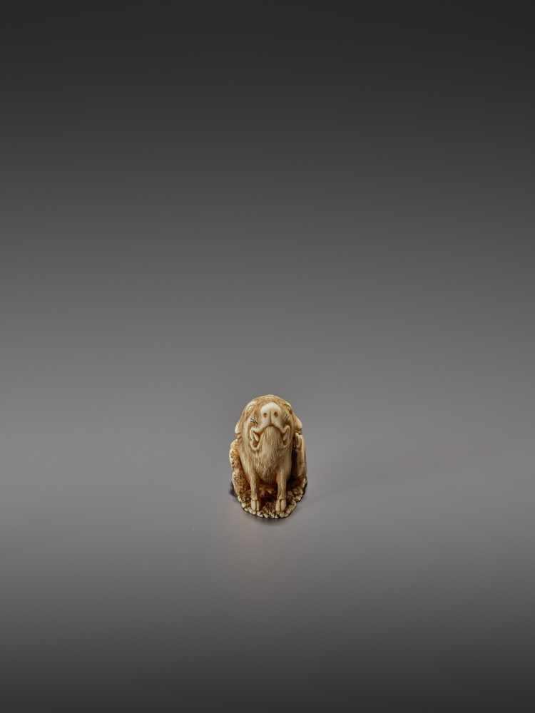 MASAYUKI: A FINE IVORY NETSUKE OF A BOAR SCRATCHING ITS EAR By Masayuki, signed MasayukiJapan, - Image 8 of 13