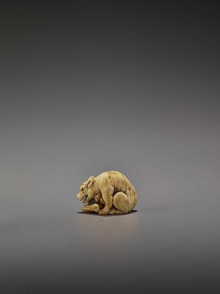 AN EARLY IVORY NETSUKE OF A WOLF WITH HAUNCH UnsignedJapan, Kyoto, 18th century, Edo period (1615- - Image 6 of 10