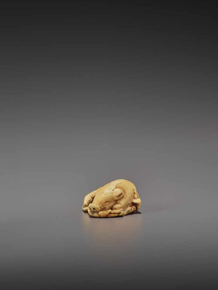 A FINE IVORY NETSUKE OF TWO RESTING BOARS UnsignedJapan, Kyoto, 18th century, Edo period (1615- - Image 5 of 9