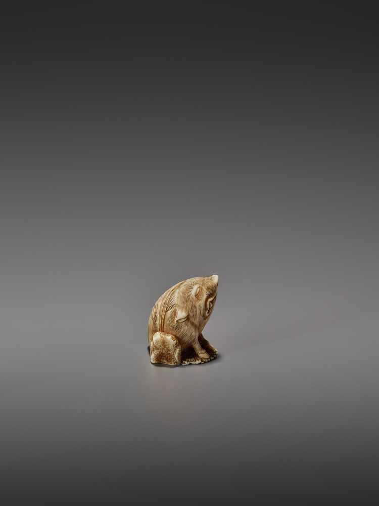 MASAYUKI: A FINE IVORY NETSUKE OF A BOAR SCRATCHING ITS EAR By Masayuki, signed MasayukiJapan, - Image 3 of 13