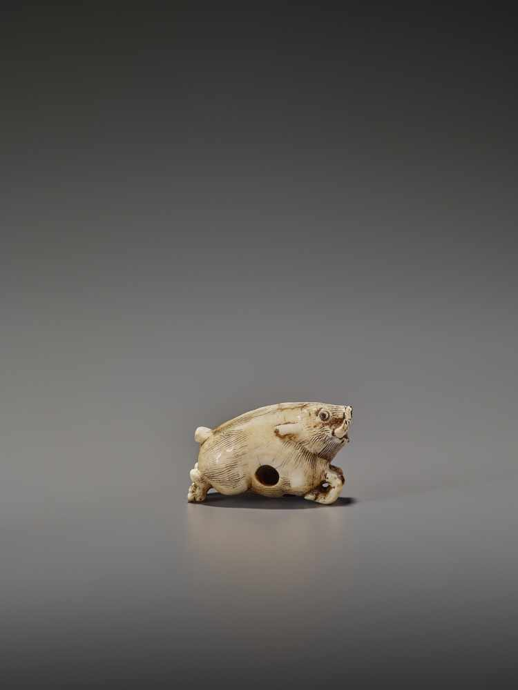 AN UNUSUAL IVORY NETSUKE OF A RUNNING BOAR UnsignedJapan, 18th century, Edo period (1615-1868)A very - Image 6 of 11
